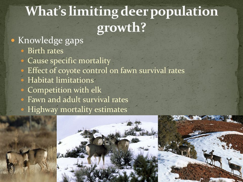 We are currently working with BYU and USU to design a study investigate fawn survival from birth to 6 months.