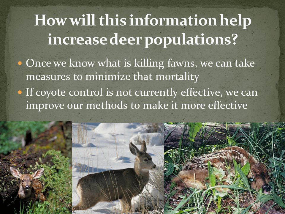Utah Range Trend Studies have documented a steady decline in the quality of mule deer habitat We currently have no research looking at how habitat quality and quantity limits population growth Recent studies in Colorado and Idaho have shown that habitat quality and quantity is the main factor limiting population growth