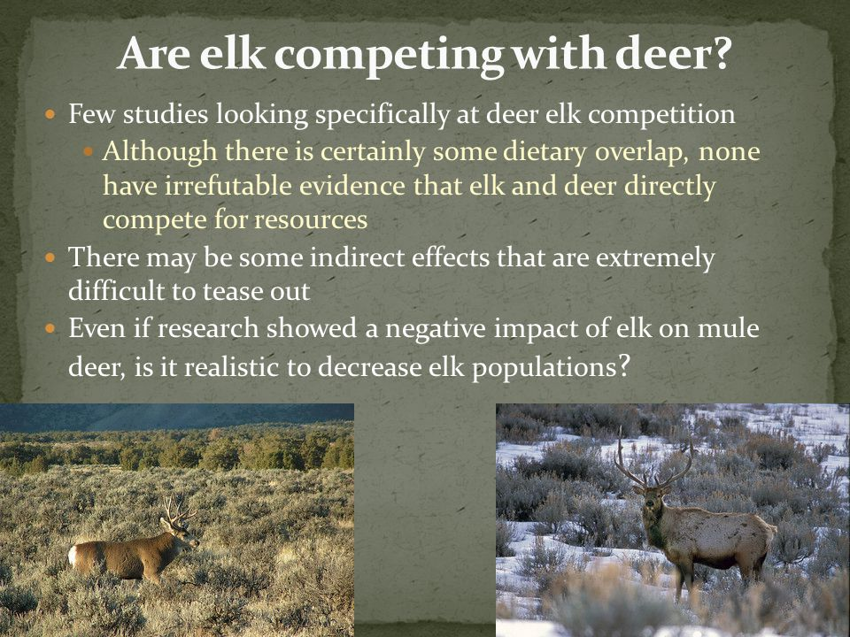Few studies looking specifically at deer elk competition Although there is certainly some dietary overlap, none have irrefutable evidence that elk and