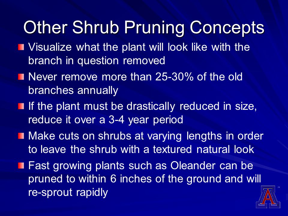 Other Shrub Pruning Concepts Visualize what the plant will look like with the branch in question removed Never remove more than 25-30% of the old bran