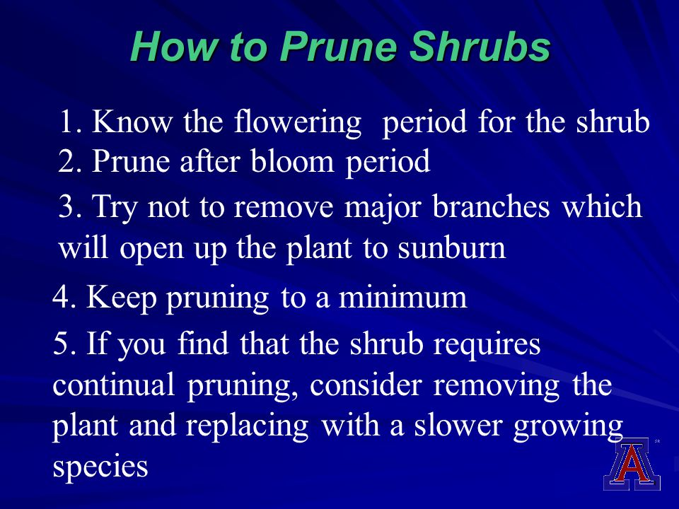 How to Prune Shrubs 1. Know the flowering period for the shrub 3. Try not to remove major branches which will open up the plant to sunburn 2. Prune af