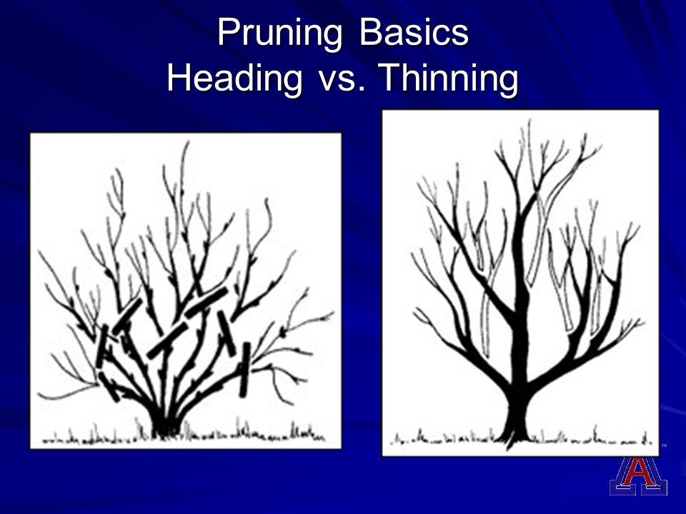 Pruning Basics Heading vs. Thinning