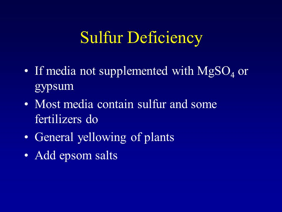 Sulfur Deficiency If media not supplemented with MgSO 4 or gypsum Most media contain sulfur and some fertilizers do General yellowing of plants Add epsom salts