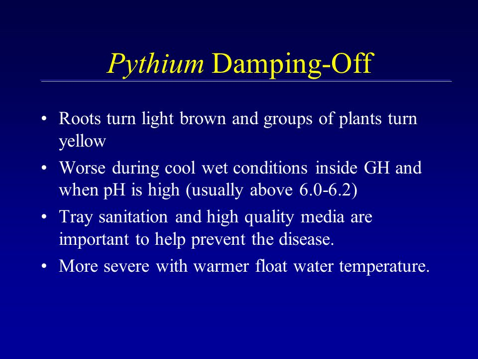 Pythium Damping-Off Roots turn light brown and groups of plants turn yellow Worse during cool wet conditions inside GH and when pH is high (usually above 6.0-6.2) Tray sanitation and high quality media are important to help prevent the disease.