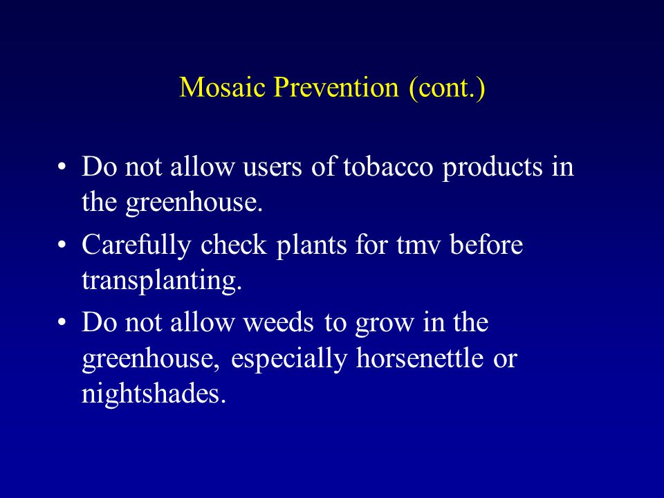 Mosaic Prevention (cont.) Do not allow users of tobacco products in the greenhouse.