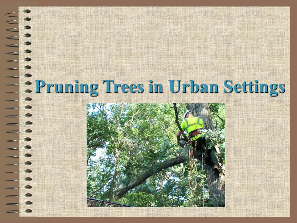 Pruning Trees in Urban Settings