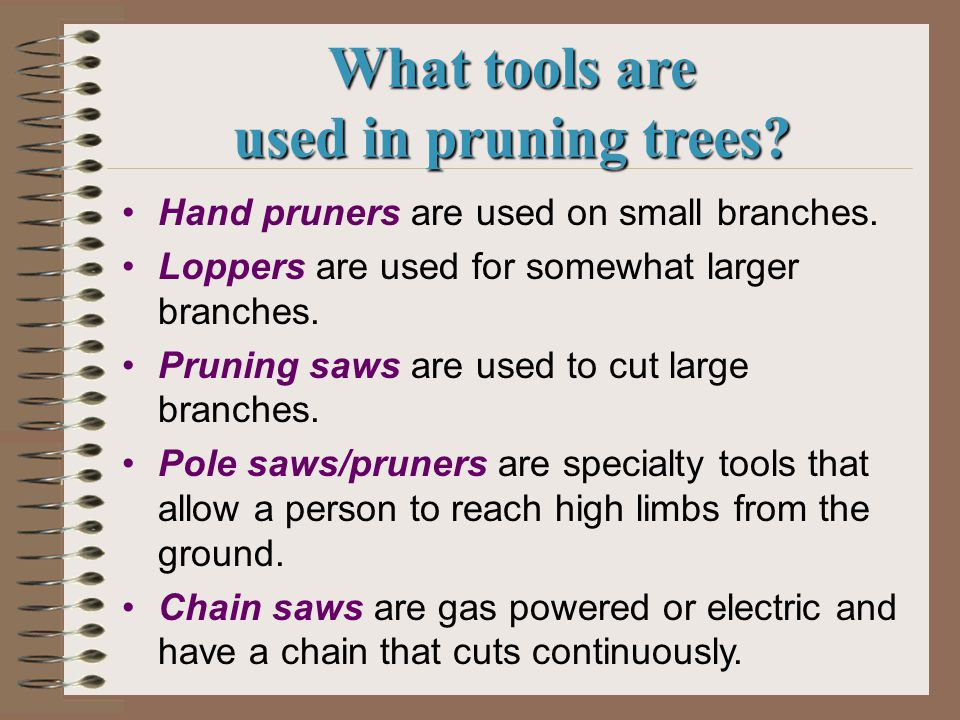 What tools are used in pruning trees. Hand pruners are used on small branches.