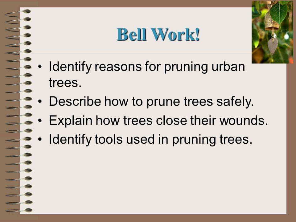 Bell Work. Identify reasons for pruning urban trees.