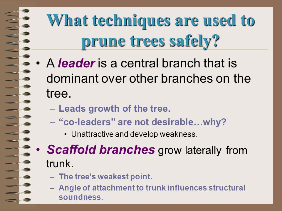 What tools are used in pruning trees.Hand pruners are used on small branches.