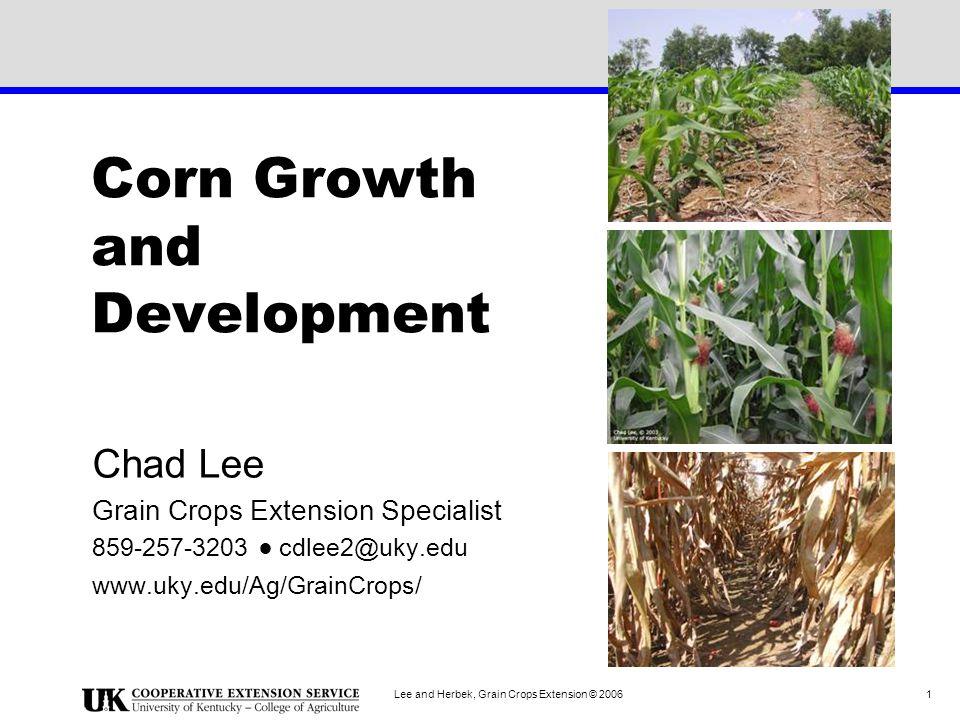 Lee and Herbek, Grain Crops Extension © 2006 12 V6 Tassel development has started.