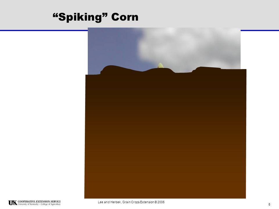 Lee and Herbek, Grain Crops Extension © 2006 16 V9