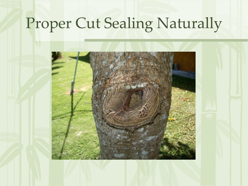 Proper Cut Sealing Naturally