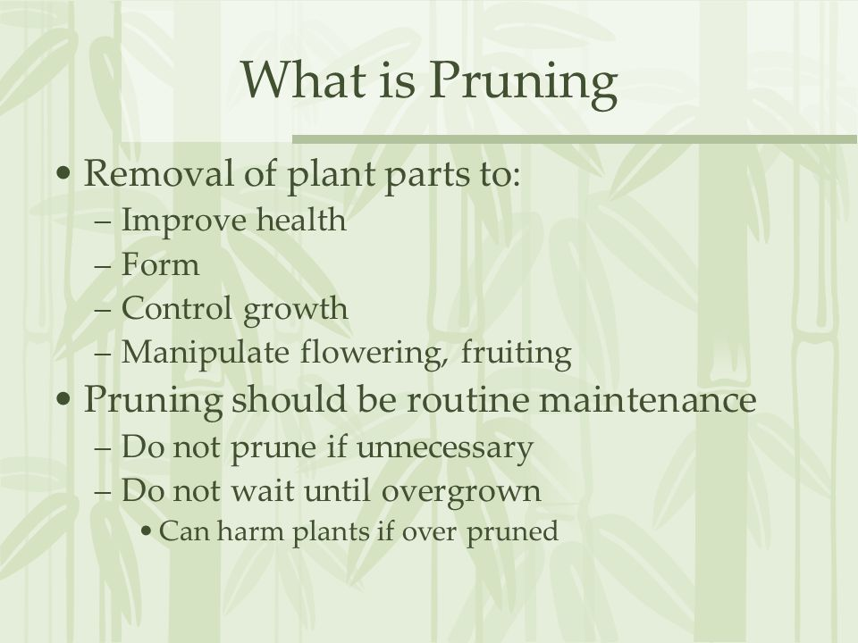 What is Pruning Removal of plant parts to: –Improve health –Form –Control growth –Manipulate flowering, fruiting Pruning should be routine maintenance –Do not prune if unnecessary –Do not wait until overgrown Can harm plants if over pruned
