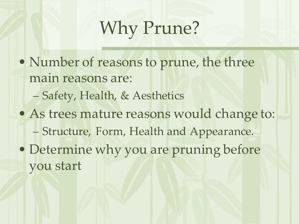 Why Prune.