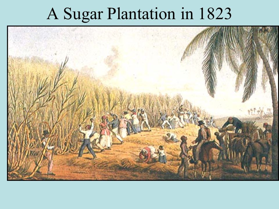 A Sugar Plantation in 1823