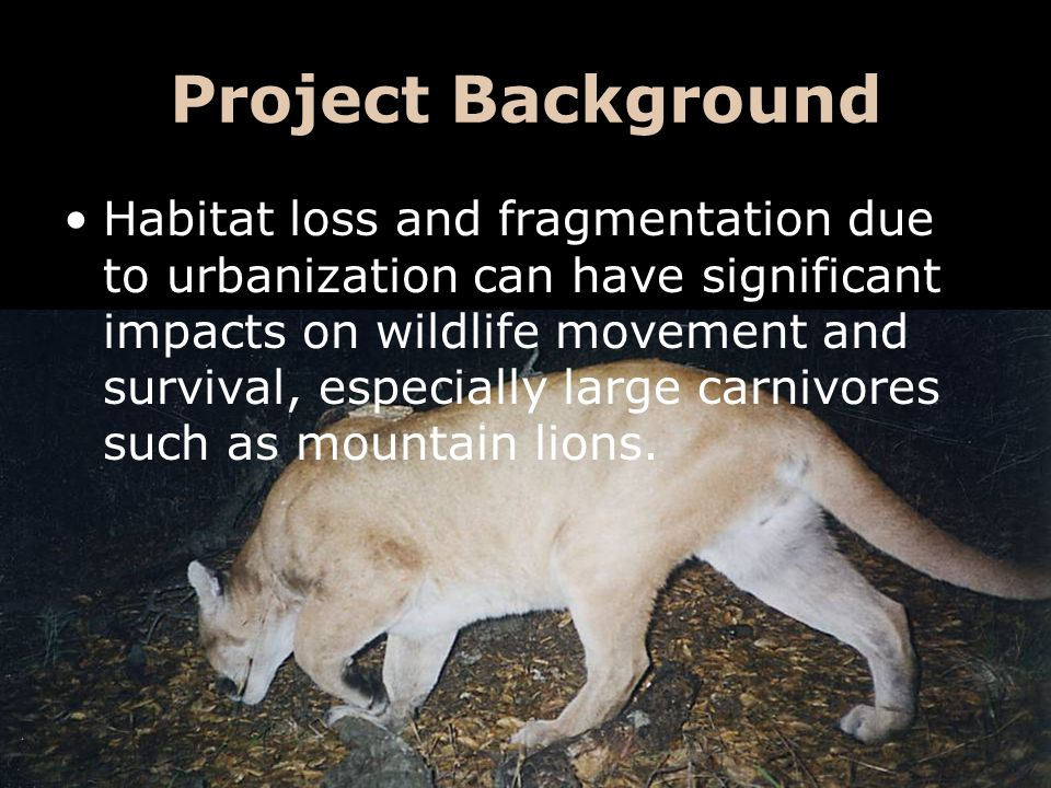 Project Background Habitat loss and fragmentation due to urbanization can have significant impacts on wildlife movement and survival, especially large