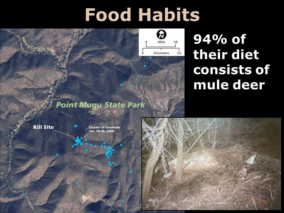 Food Habits 94% of their diet consists of mule deer