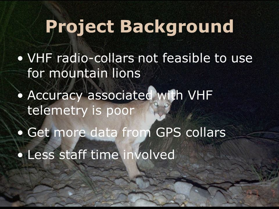 Project Background VHF radio-collars not feasible to use for mountain lions Accuracy associated with VHF telemetry is poor Get more data from GPS coll