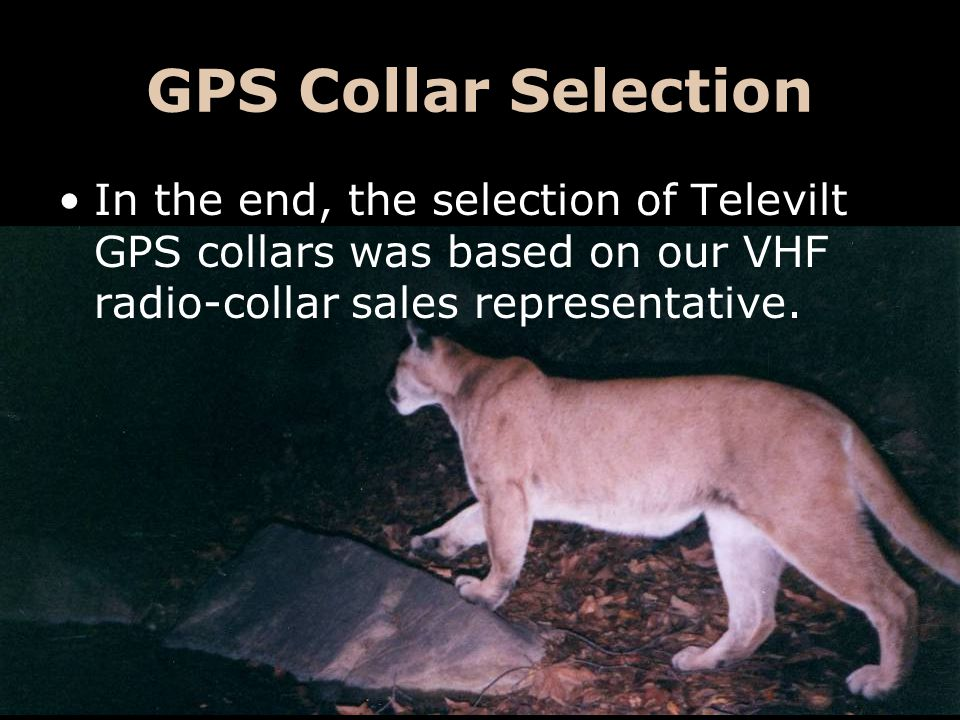Televilt GPS Collars Huge up-front investment ($$$) To date we have used 3 different collar models: –Simplex –Tellus (VHF) –Tellus (GSM)