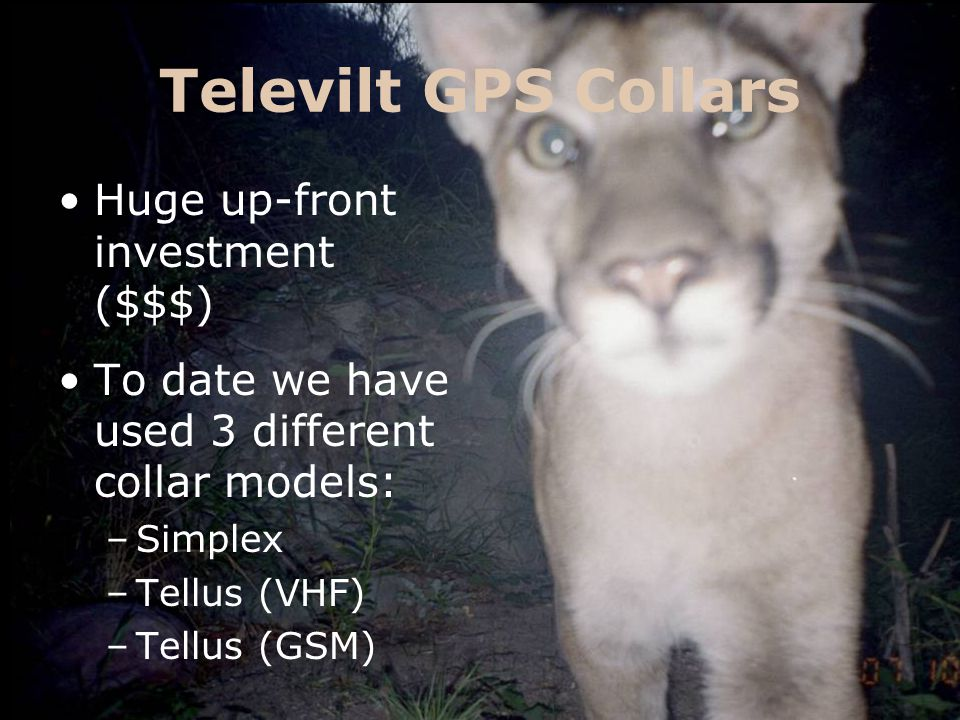 Televilt GPS Collars Collars are programmed to collect points on a user-defined schedule.