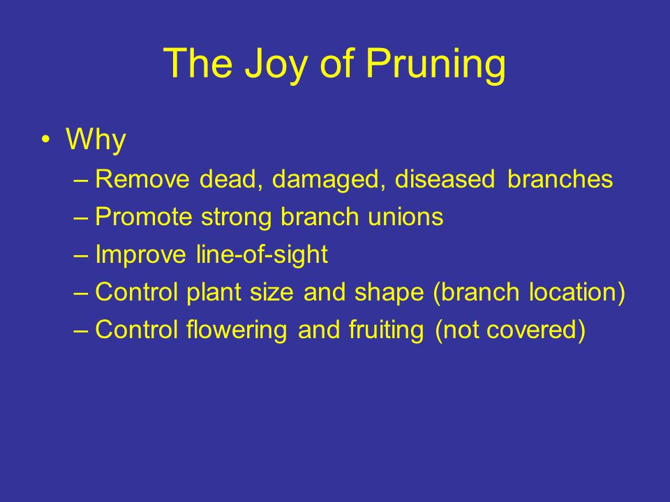 The Joy of Pruning Why –Remove dead, damaged, diseased branches –Promote strong branch unions –Improve line-of-sight –Control plant size and shape (br