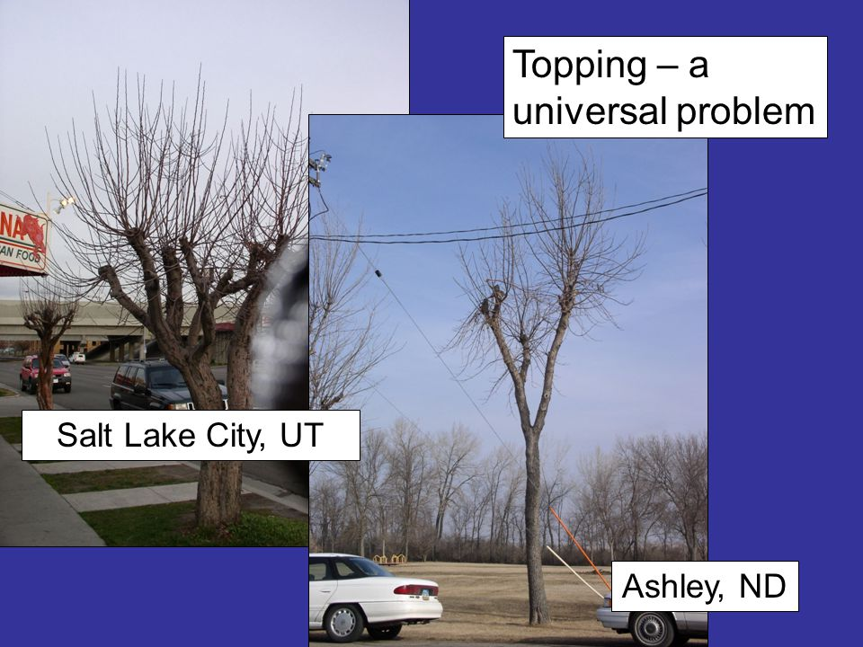 Topping – a universal problem Ashley, ND Salt Lake City, UT