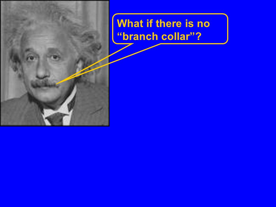 What if there is no branch collar