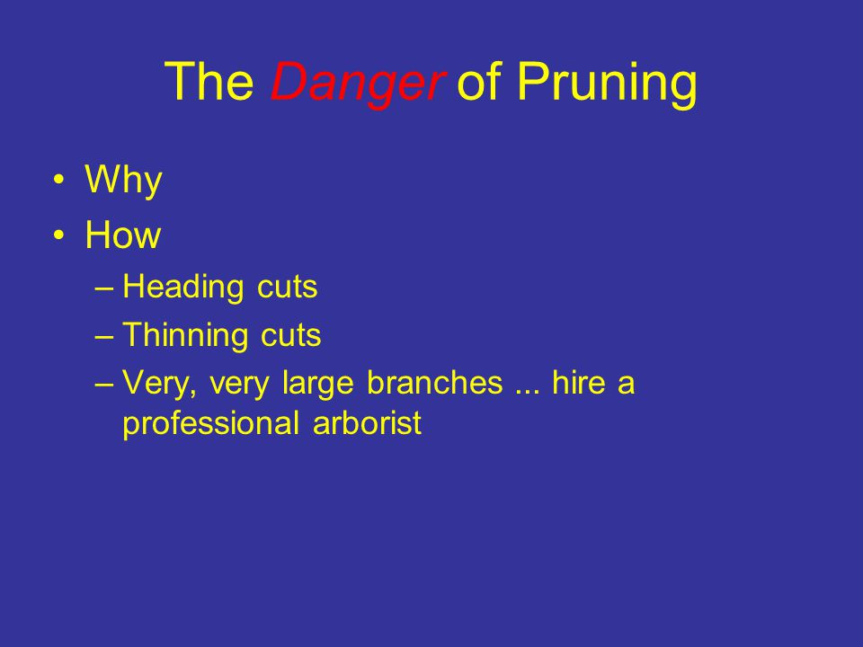 The Danger of Pruning Why How –Heading cuts –Thinning cuts –Very, very large branches...