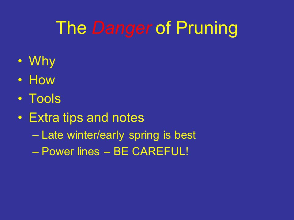 The Danger of Pruning Why How Tools Extra tips and notes –Late winter/early spring is best –Power lines – BE CAREFUL!
