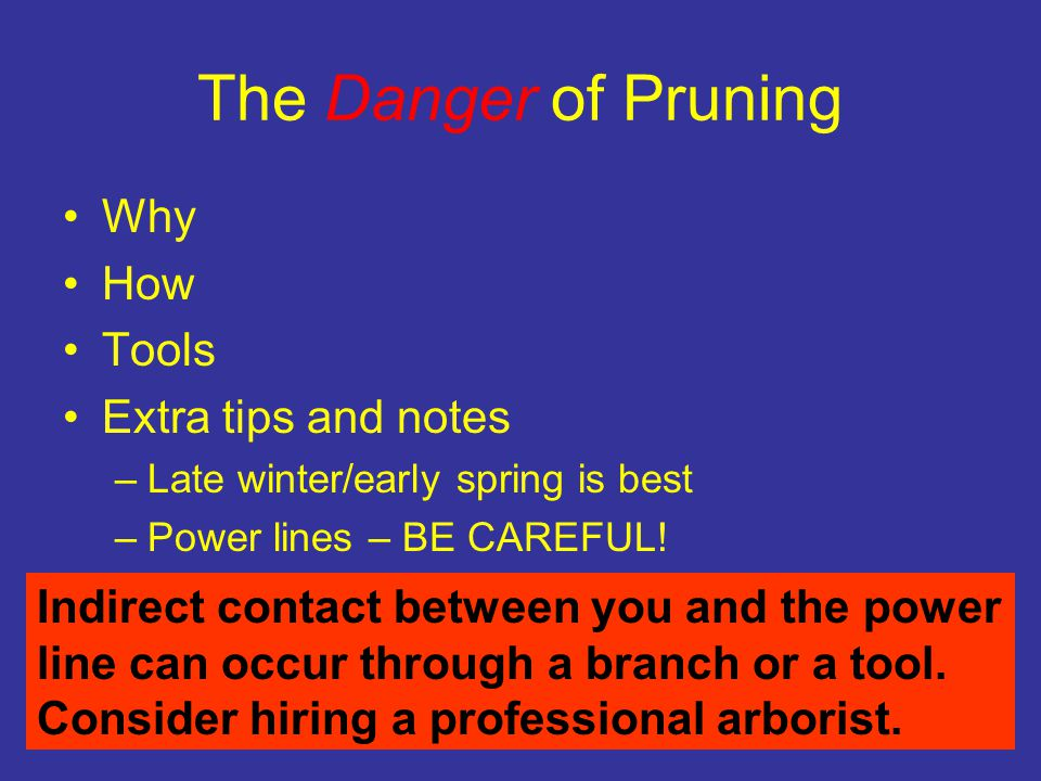 The Danger of Pruning Why How Tools Extra tips and notes –Late winter/early spring is best –Power lines – BE CAREFUL.