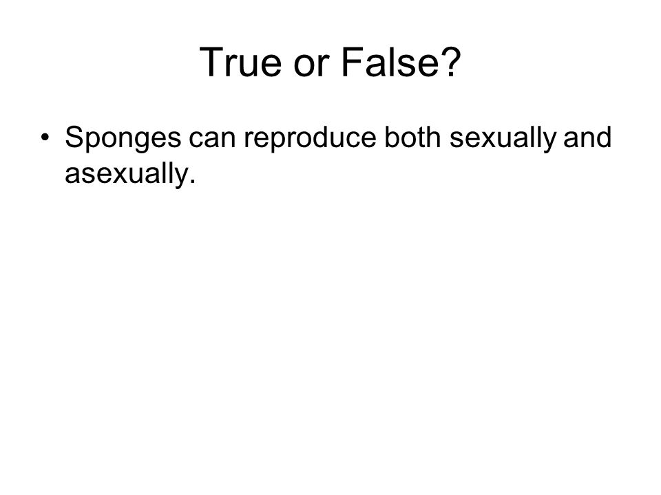 True or False? Sponges can reproduce both sexually and asexually.