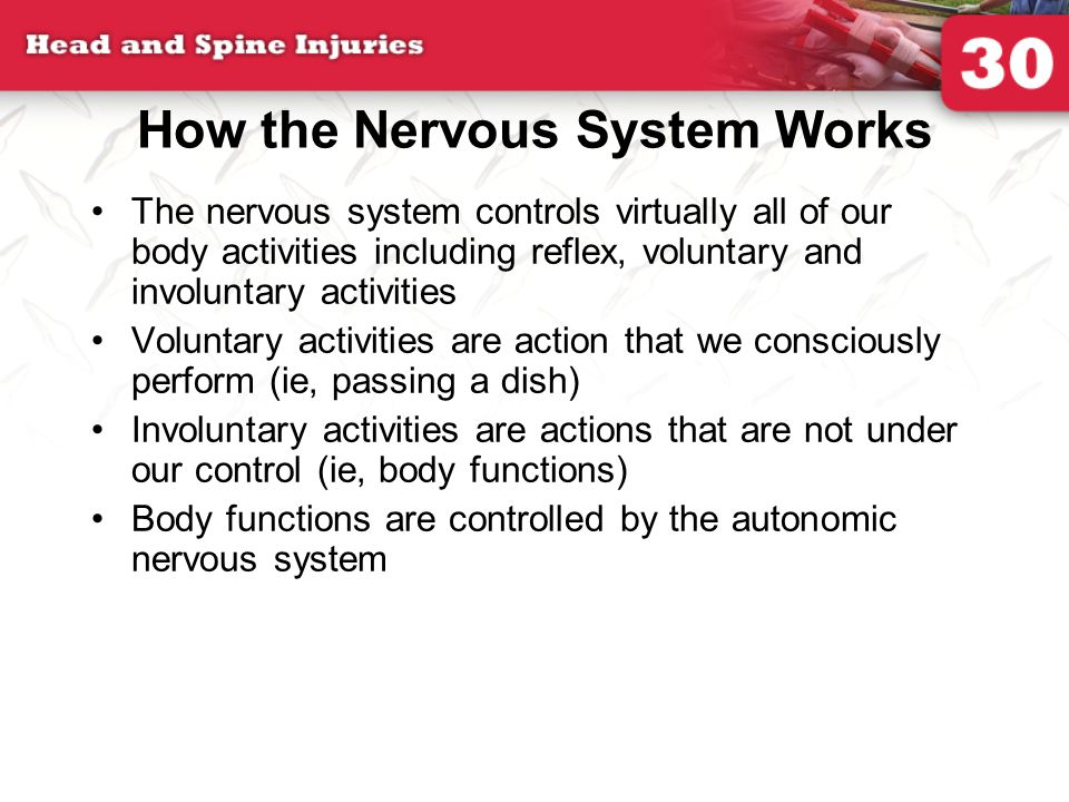 How the Nervous System Works The nervous system controls virtually all of our body activities including reflex, voluntary and involuntary activities Voluntary activities are action that we consciously perform (ie, passing a dish) Involuntary activities are actions that are not under our control (ie, body functions) Body functions are controlled by the autonomic nervous system
