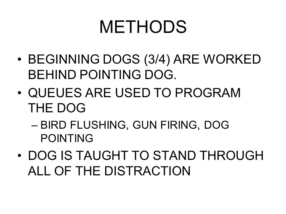 METHODS BEGINNING DOGS (3/4) ARE WORKED BEHIND POINTING DOG.