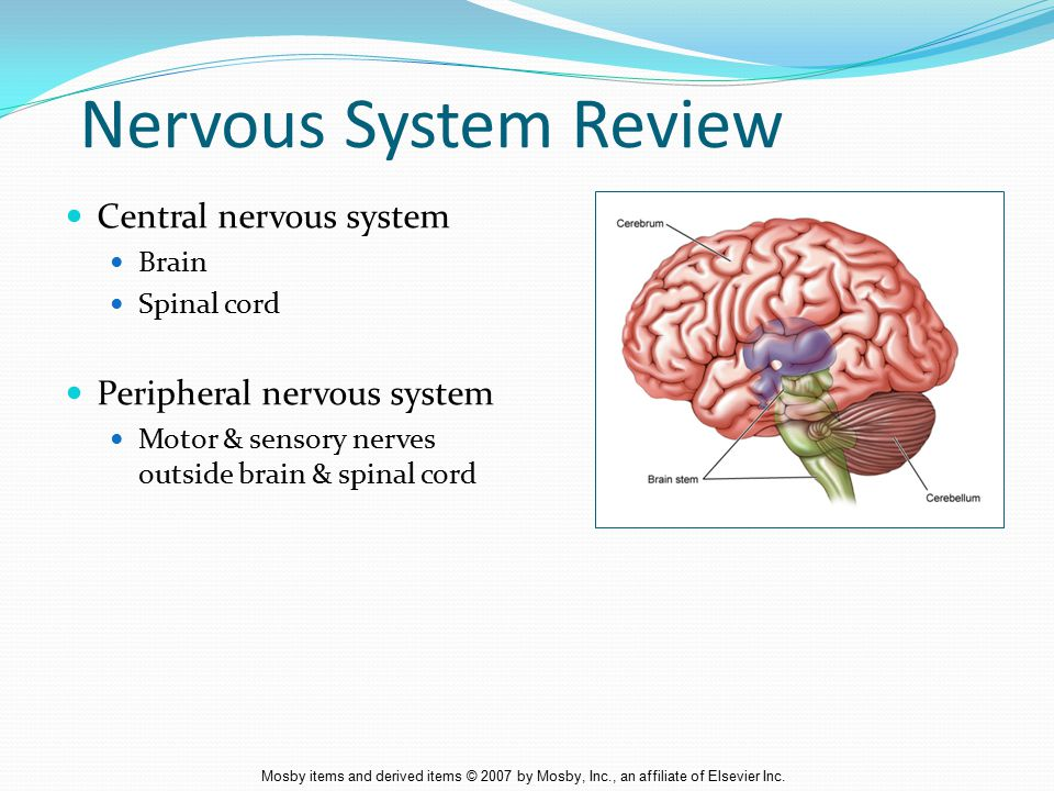 Mosby items and derived items © 2007 by Mosby, Inc., an affiliate of Elsevier Inc.