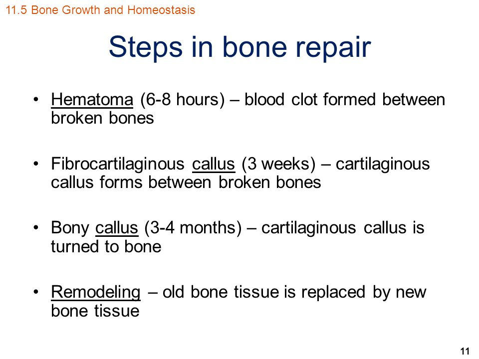 11 Steps in bone repair Hematoma (6-8 hours) – blood clot formed between broken bones Fibrocartilaginous callus (3 weeks) – cartilaginous callus forms