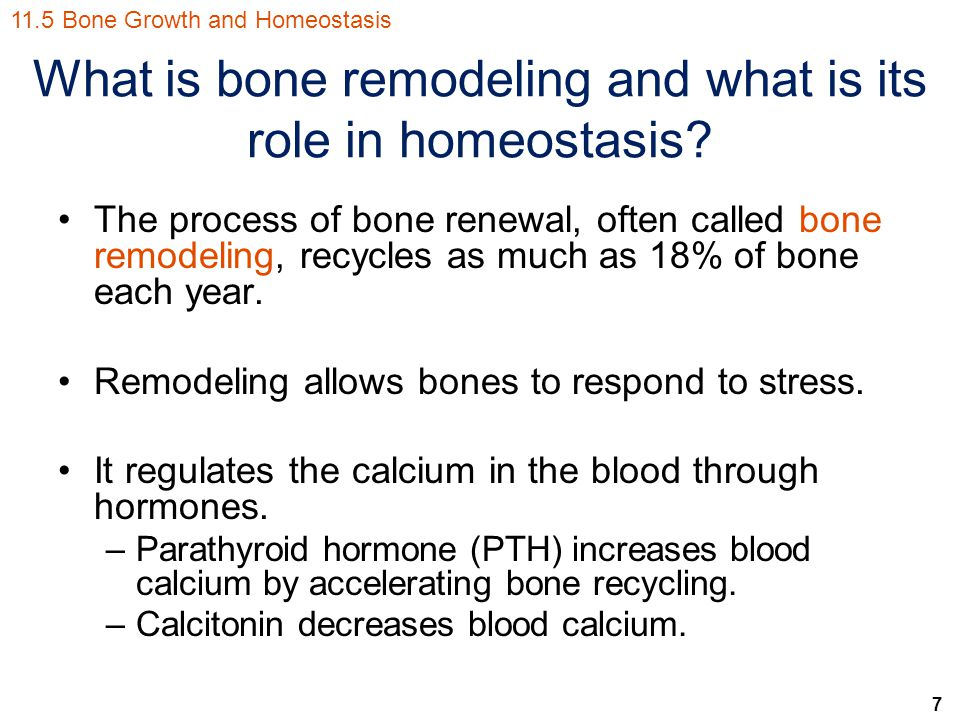 7 What is bone remodeling and what is its role in homeostasis? The process of bone renewal, often called bone remodeling, recycles as much as 18% of b