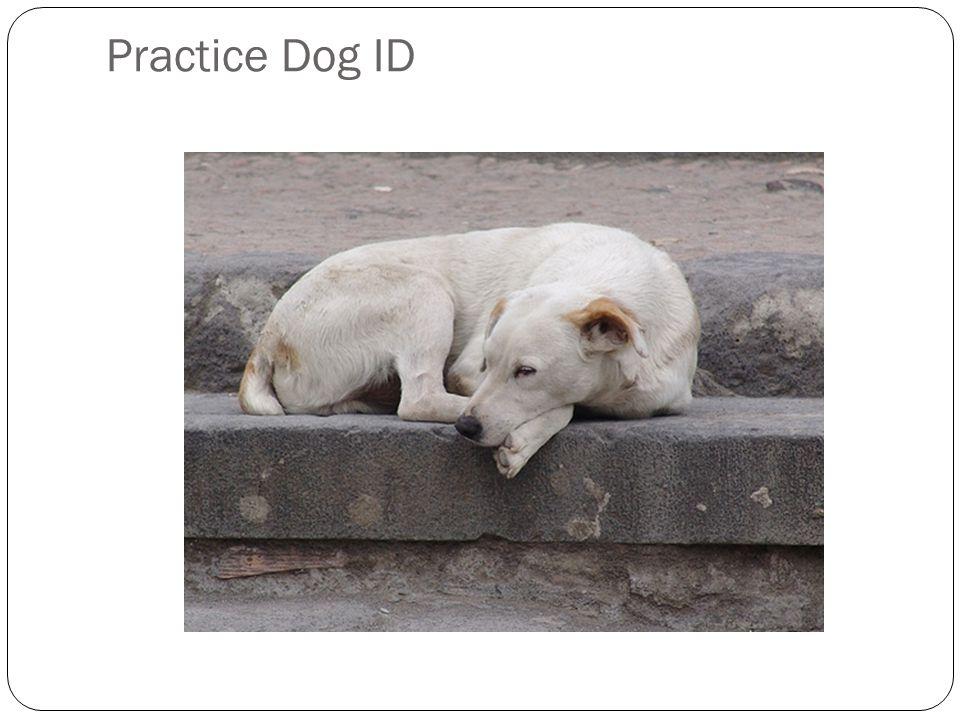 Practice Dog ID