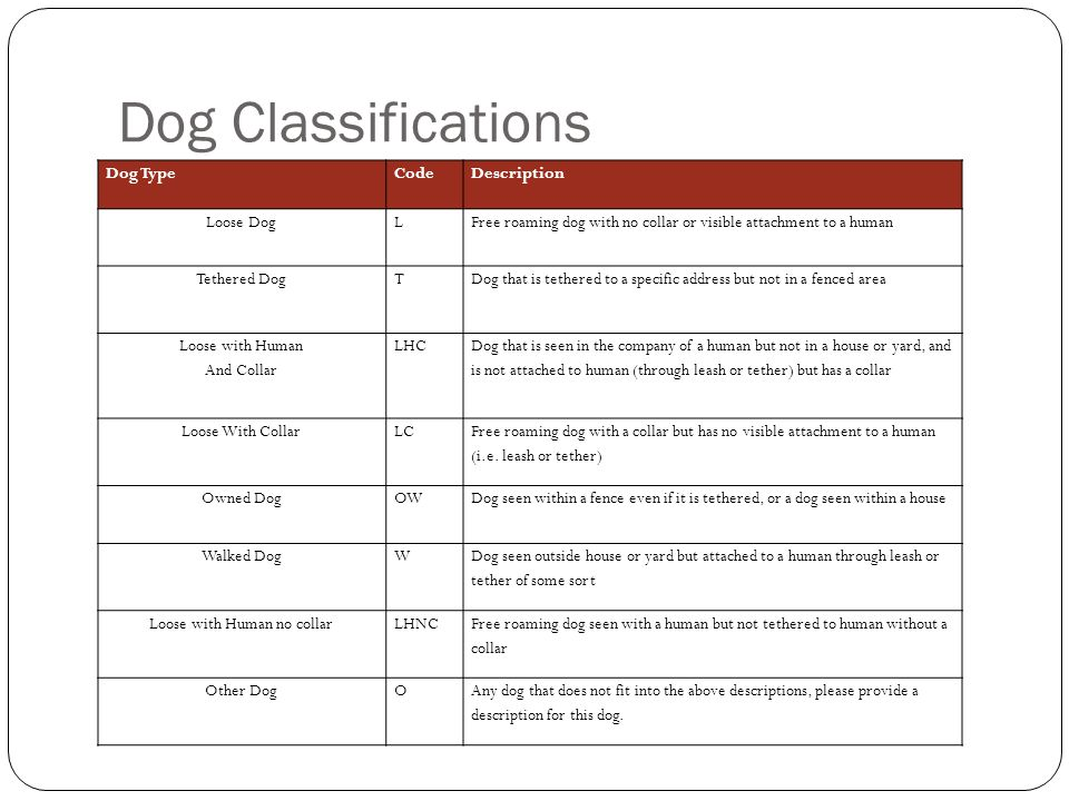 Dog Classifications Dog TypeCodeDescription Loose DogLFree roaming dog with no collar or visible attachment to a human Tethered DogTDog that is tethered to a specific address but not in a fenced area Loose with Human And Collar LHC Dog that is seen in the company of a human but not in a house or yard, and is not attached to human (through leash or tether) but has a collar Loose With CollarLC Free roaming dog with a collar but has no visible attachment to a human (i.e.