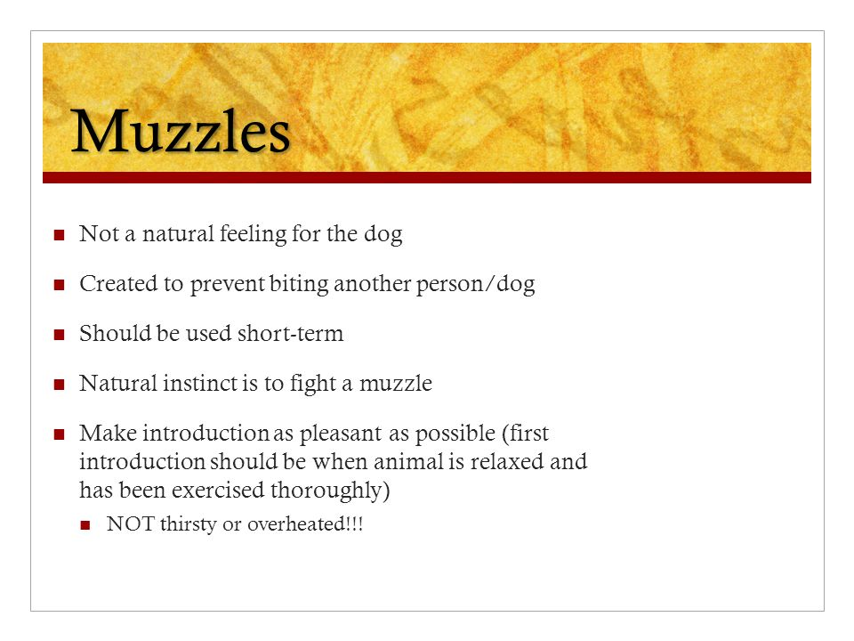 Muzzles Not a natural feeling for the dog Created to prevent biting another person/dog Should be used short-term Natural instinct is to fight a muzzle