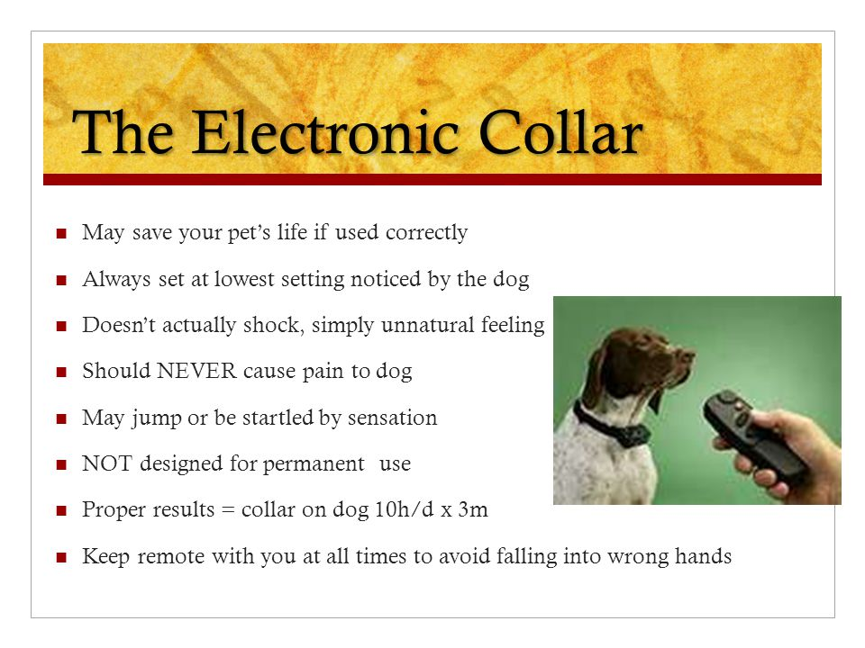 The Electronic Collar May save your pet's life if used correctly Always set at lowest setting noticed by the dog Doesn't actually shock, simply unnatural feeling Should NEVER cause pain to dog May jump or be startled by sensation NOT designed for permanent use Proper results = collar on dog 10h/d x 3m Keep remote with you at all times to avoid falling into wrong hands