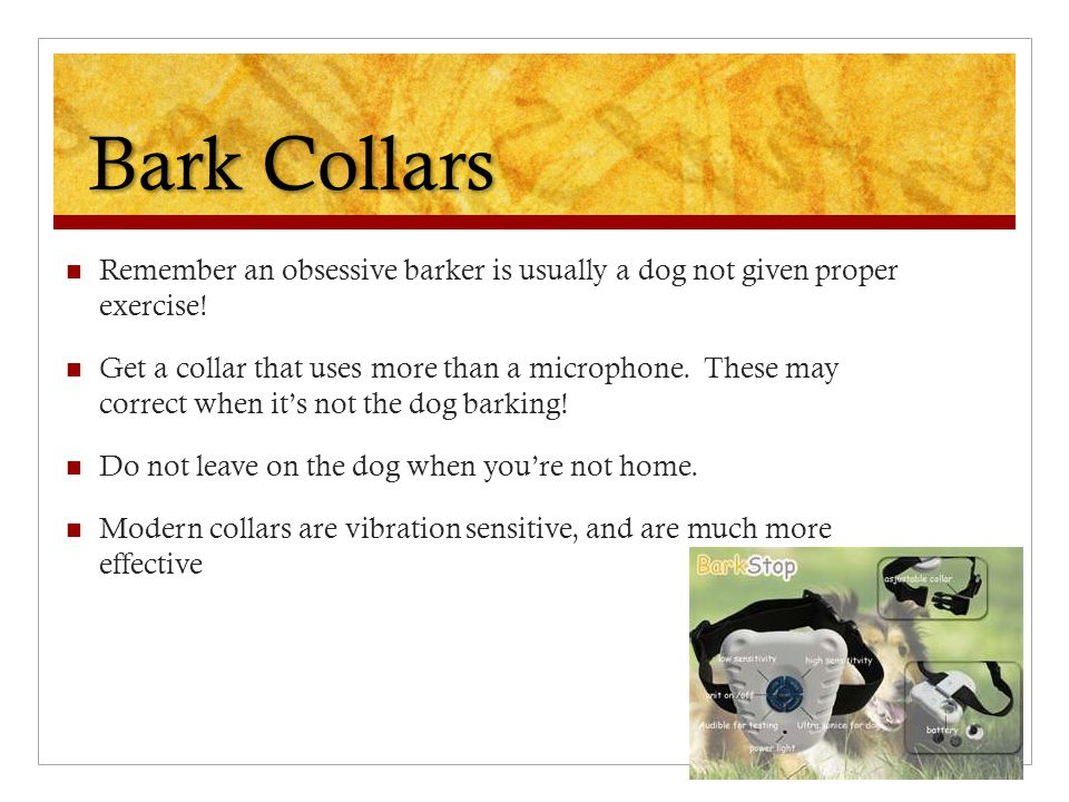 Bark Collars Remember an obsessive barker is usually a dog not given proper exercise! Get a collar that uses more than a microphone. These may correct