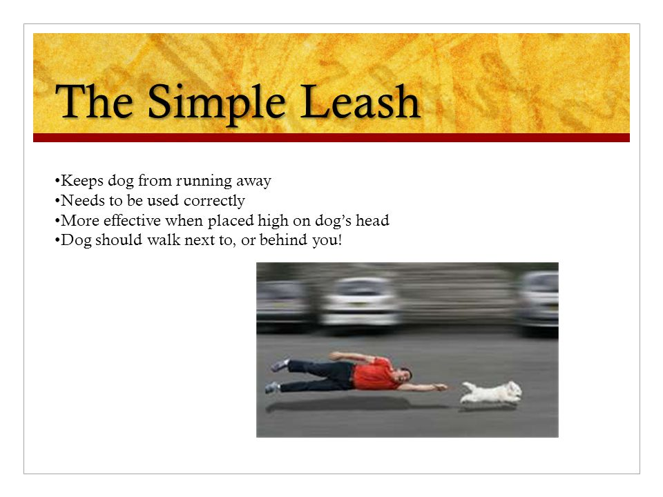 The Simple Leash Keeps dog from running away Needs to be used correctly More effective when placed high on dog's head Dog should walk next to, or behi