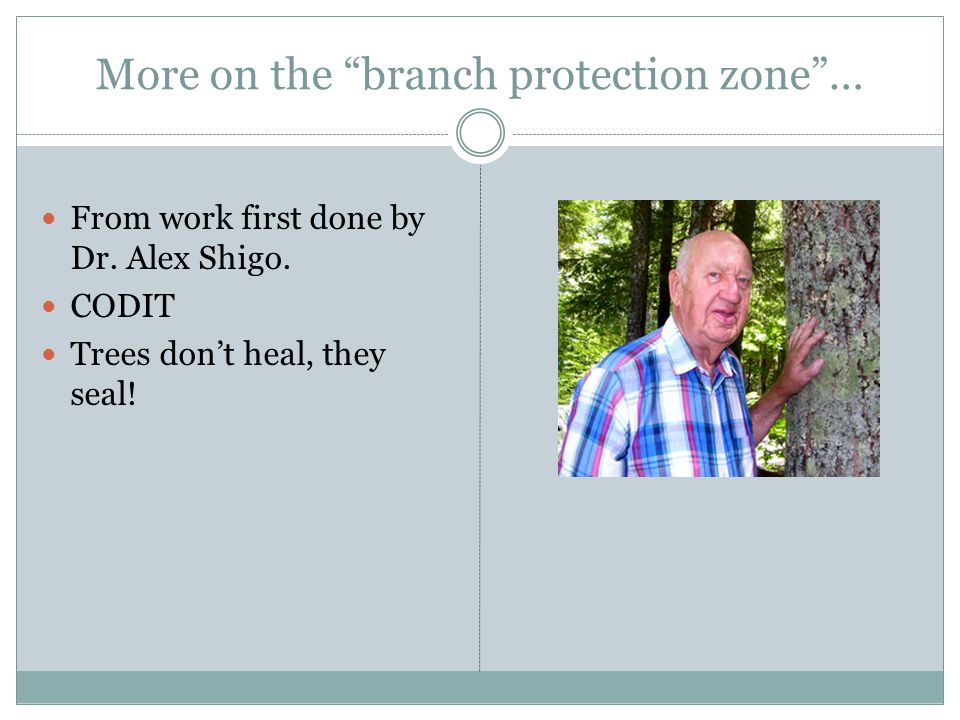 "More on the ""branch protection zone""… From work first done by Dr. Alex Shigo. CODIT Trees don't heal, they seal!"