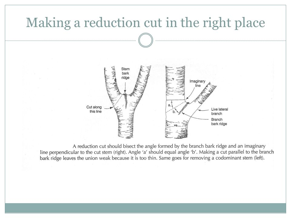 Making a reduction cut in the right place
