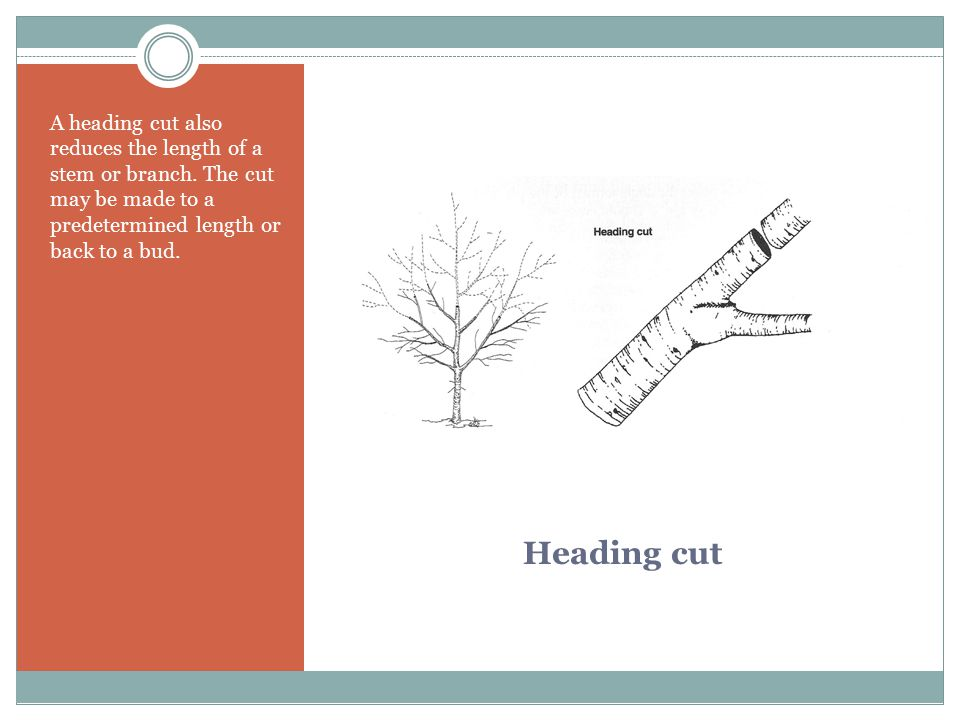 Heading cut A heading cut also reduces the length of a stem or branch. The cut may be made to a predetermined length or back to a bud.