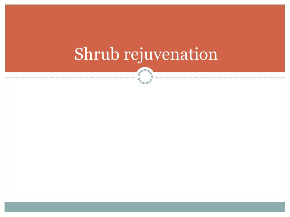 Shrub rejuvenation