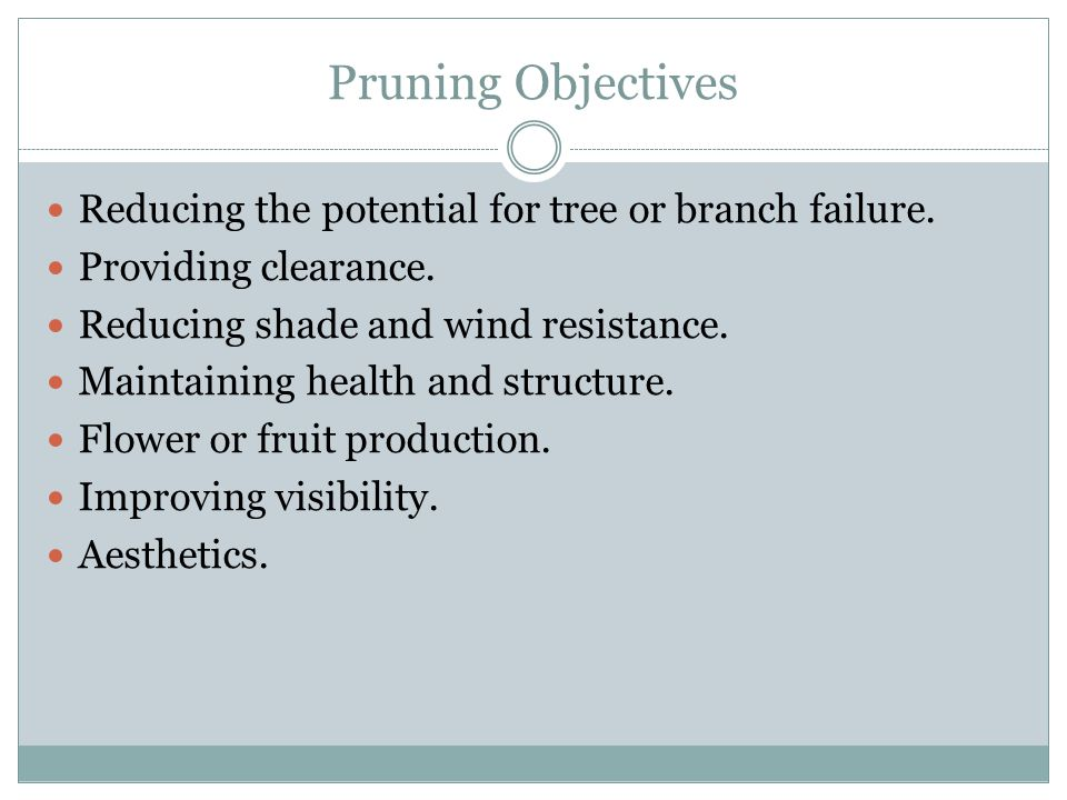 Pruning Objectives Reducing the potential for tree or branch failure. Providing clearance. Reducing shade and wind resistance. Maintaining health and