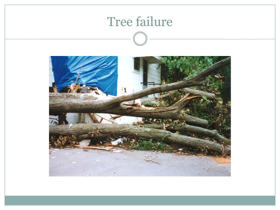 Tree failure