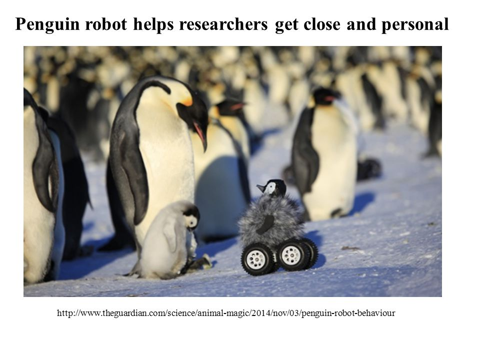 Penguin robot helps researchers get close and personal http://www.theguardian.com/science/animal-magic/2014/nov/03/penguin-robot-behaviour