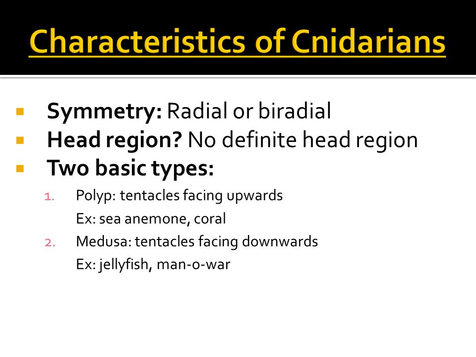  Symmetry: Radial or biradial  Head region.